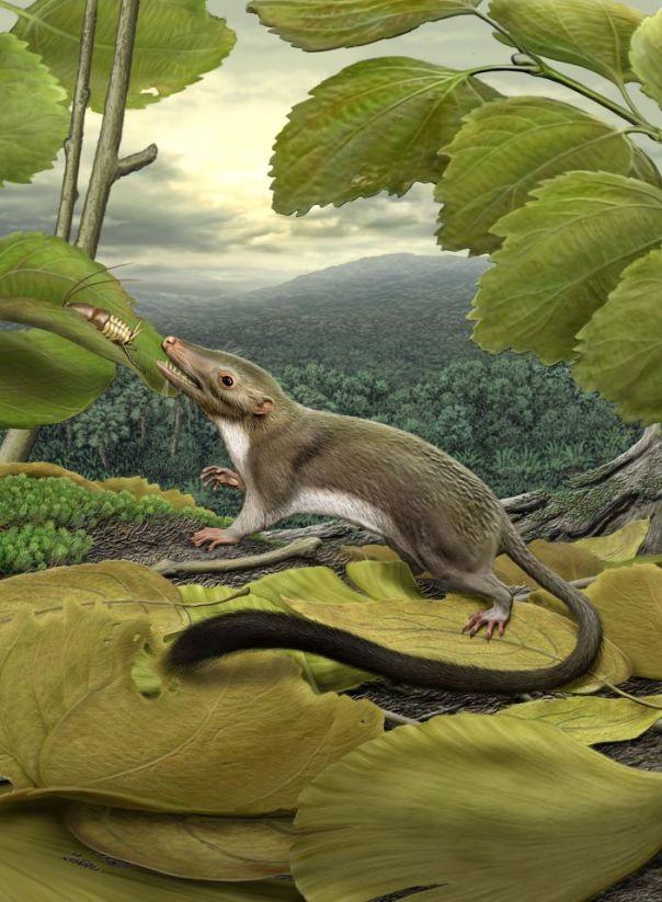 marsupial.jpg