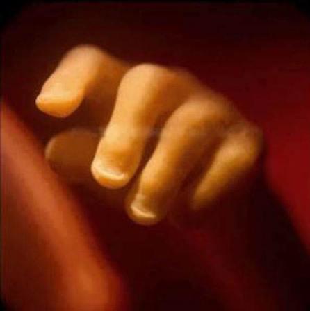 19 semanas. Ya están definidas las uñas.