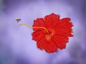 Orquídea en el preludio al amor